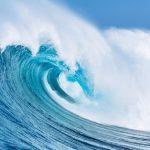 Uleiul de krill si puterea fosfolipidelor pe care le contine